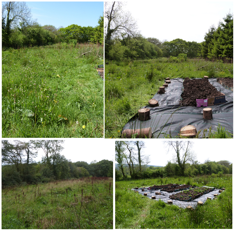 before and after potato beds
